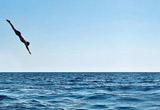 Трамплин для прыжков в воду на сандеке