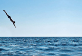 Diving board on sundeck